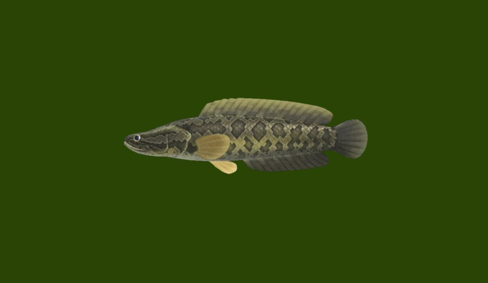 giant snakehead animal crossing